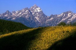 Grand Teton National Park with wildflowers